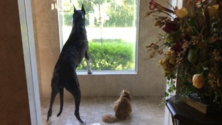 Dog and cat completely mesmerized by curious squirrel - Video