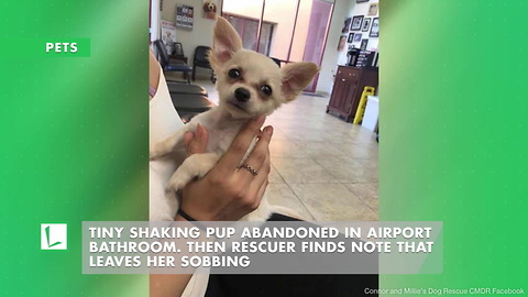 Tiny Shaking Pup Abandoned in Airport Bathroom. Then Rescuer Finds Note That Leaves Her Sobbing