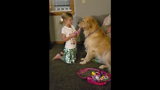 Little girl plays animal doctor with her Golden Retriever - Video