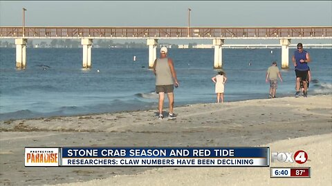 Stone Crab season and red tide
