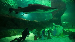 Shark Nativity in Madrid - Video