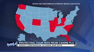 Dog flu: What you need to know to keep your pet safe - Video