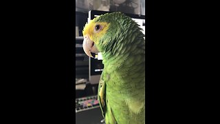 Persistent Talking Parrot Repeatedly Asks For Ice Cream - Video