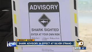 Great white shark spotted at Silver Strand; advisory in effect