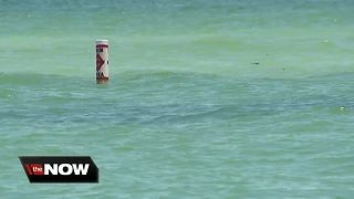 Red Tide advisory impacting Tampa Bay area beaches