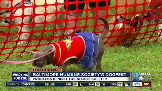 Dogfest 2019: A day for dogs and dog lovers