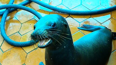 Sea lion's adorable begging gets him treats from fisherman