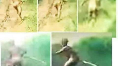 3 Ft Tall Mysterious Being (Humanoid Ape Creature) Spotted By Motorcyclists In Sumatra