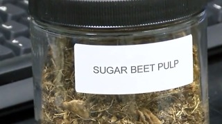 Local scientists looking at transforming sugar beets into jet fuel - Video