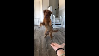 Doggy gives paw on command in hilarious fashion