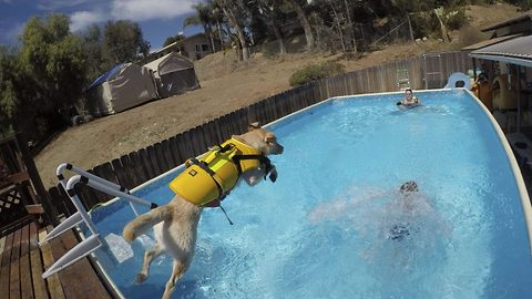 Doggy paddle: Incredible moment puppy trained to teach kids to swim rescues her surfing dog partner