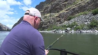 Chasing Hells Canyon Sturgeon