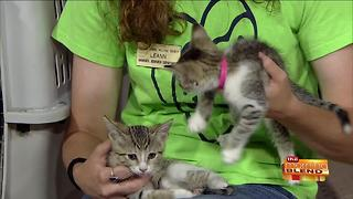 June is Adopt-a-Cat Month! - Video