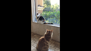 Two Cats are Fascinated by Funny Squirrel - Video