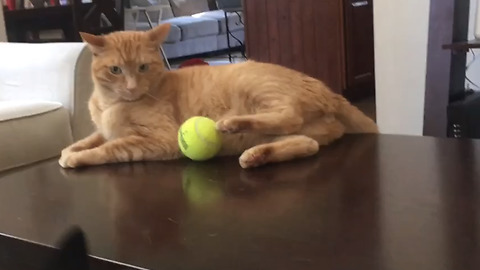 Hilarious Video Of A Cat Pranking A Dog