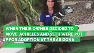 2 Senior Dogs Separated after Being Surrendered to Shelter. Family Reunites Pair 3 Months Later - Video