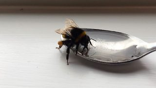 Incredible moment doctor saves bee with sugar water