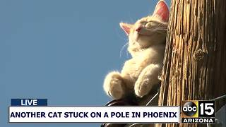 AGAIN!? Another cat stuck on a pole in Phoenix - Video