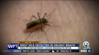 West Nile virus detected in Delray Beach