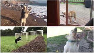 Best of: Epic dog fails