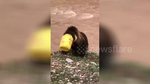Villagers save bear cub with head stuck in bucket