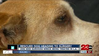 Rescued dog heading to surgery thanks to Marley's Mutts