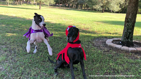 Great Danes Have Octopus And Lobster Halloween Costume Fun