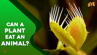 What if plants could eat animals?
