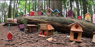 Incredible fairy village discovered in park forest