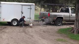 Jeffrey the goose tries to help owner with trailer - Video