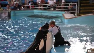 Orcas 'can imitate human speech' - Video