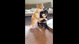Adorable dog loves to hug his brother - Video
