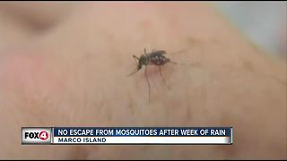 Voracious mosquitoes back in Marco - Video
