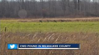 Chronic Wasting Disease found in Milwaukee County - Video