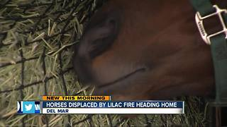 Horses displaced by Lilac Fire ready to move home - Video
