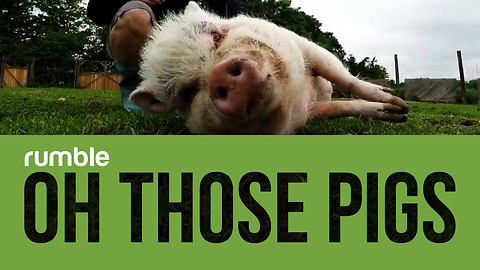 This compilation of adorable pigs is the best way to start your day!