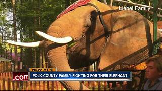 Davenport family fighting to regain custody of 'Nosey' the amazing elephant - Video