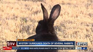 More dead rabbits found, advocates suspect they were poisoned