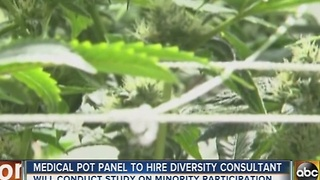 Diversity consultant to look at medical marijuana businesses