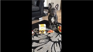 Jude the French Bulldog picks out his breakfast