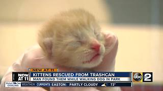 Kittens rescued from trashcan in Harford County - Video