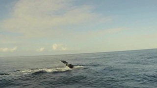 Paddleboarding with a Humpback Whale - Video
