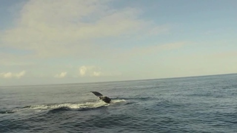Paddleboarding With A Humpback Whale