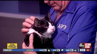Oct. 7 Rescues in Action:  Sylvester seeks special forever companion - Video