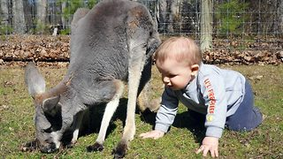 Brother And Sister Form Remarkable Friendship With A Kangaroo - Video