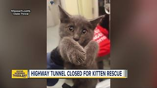 Kitten rescued after Massachusetts state troopers close down busy highway tunnel in Boston - Video
