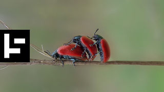 Insect Numbers Are Decreasing By The Second And We Should All Be Very Worried  - Video