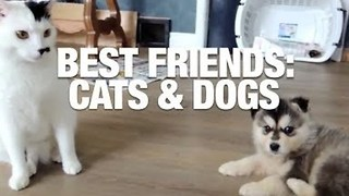 Best Friends: Cats & Dogs - Video
