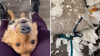 Dog is excited to show mom the mess he made