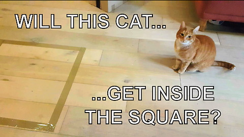If You Draw A Square On The Floor, A Cat Will Magically Appear